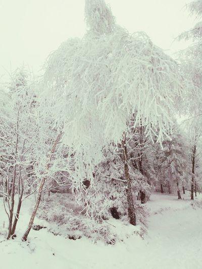 Winter Bielsko-Biała Poland Winter Trees Winter Walk Mountain View