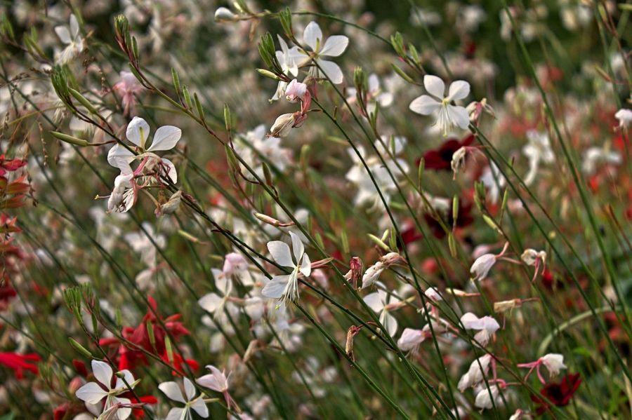 Flowers Walking Around Taking Photos