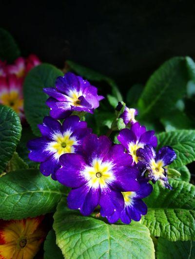 Thailand DoiAngKhang,Fang,ChiangMai Flower Nature Beauty In Nature Chiang Mai   Thailand Flawer🌸 Nature_collection