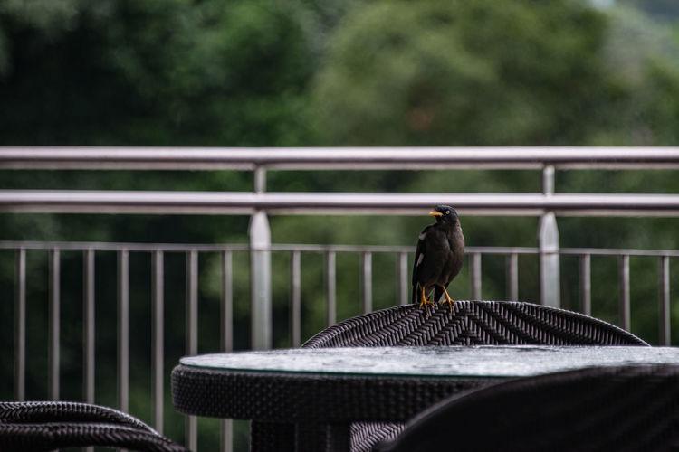Bird Photography Bird Yellow Yellow Beak Yellow Beak Bird シンガポール 足がキイロイトリ 鳥