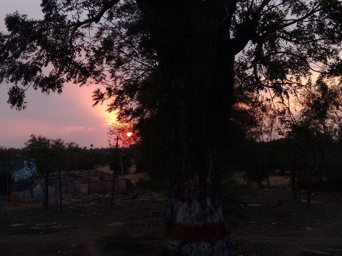 Amazing View Best Sunset  Best Sunset Shot Landscape Nature Sky Sunset Tree