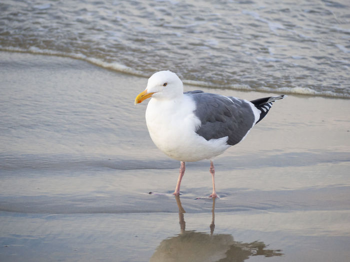 Seagull perching on a shore