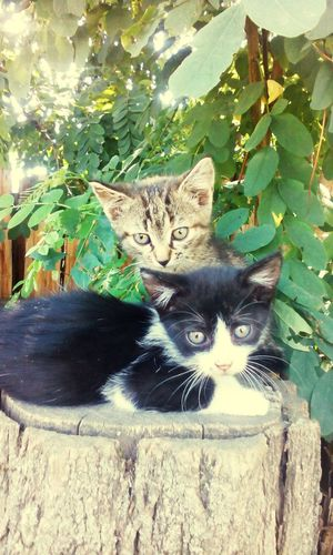 cats pets animals tree nature Colour Of Life