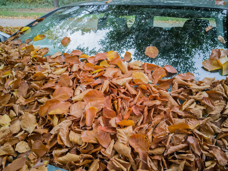Leaves and foliage on the car window Car Windscreen Autumn Foliage Sheet Wiper Avenue Asphalt Sheets Colours Humid Danger Dangerously Flatly Autumn Colours Autumn Foliage Season  Country Road Wet Passenger Car Security Street Traffic Care