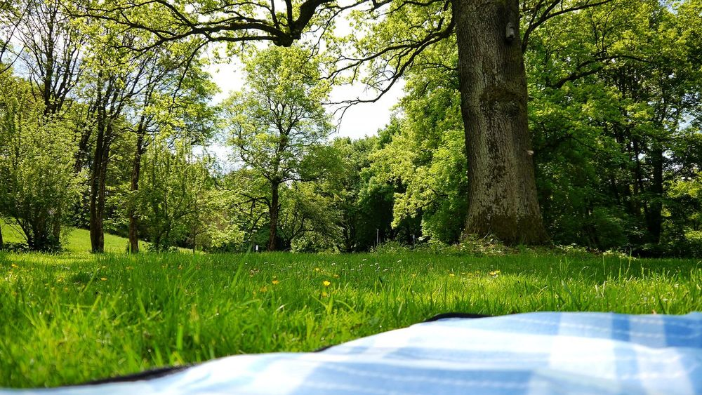 Grass Green Color Tree Growth Day No People Outdoors Sunlight Field Nature Shadow Park - Man Made Space Beauty In Nature Close-up Sky Springtime Spring Summerinthecity Summertime Summer Picknick Picknick Time Picknickdecke Blanket EyeEmNewHere