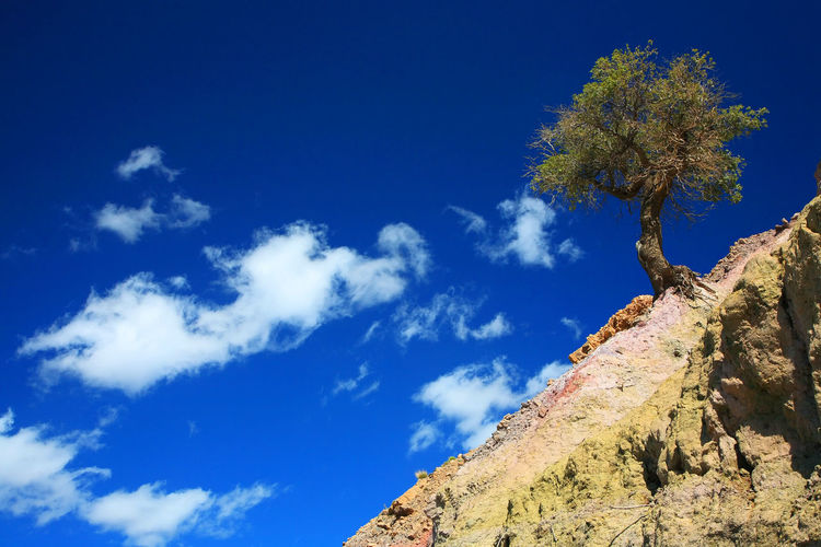 Low Angle View Of Tree On Mountain Against Cloudy Sky