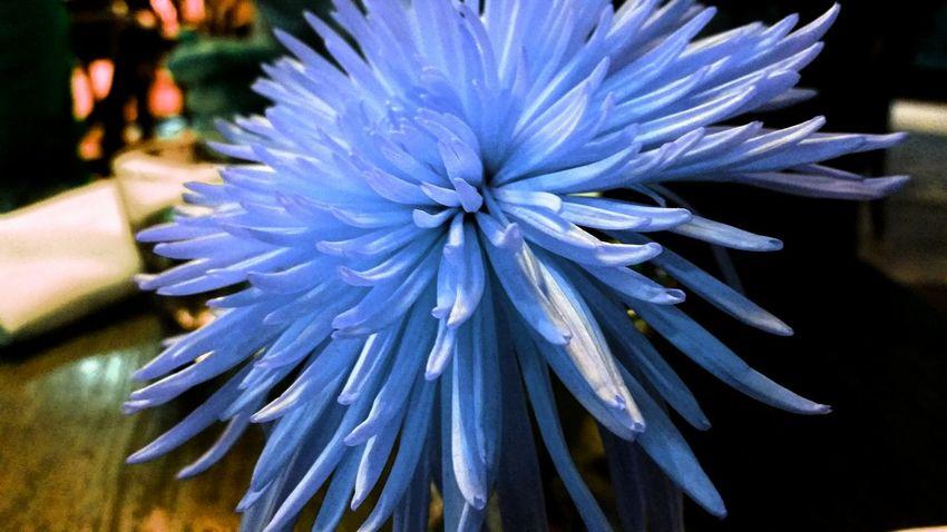 Mystic beauty found behind the dreamers eyes. Chrysanthemum Drastic Edit Flowers Dining Table Coffee Shop Scene Warm Atmosphere