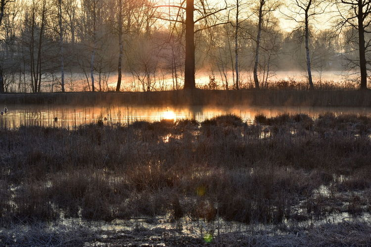 EyeEmNewHere Bare Tree Beauty In Nature Environment Fog Over Water Lake Land Landscape Morning Fog Nature No People Non-urban Scene Outdoors Plant Reflection Scenics - Nature Sunrise Morning Tranquil Scene Tranquility Tree Water