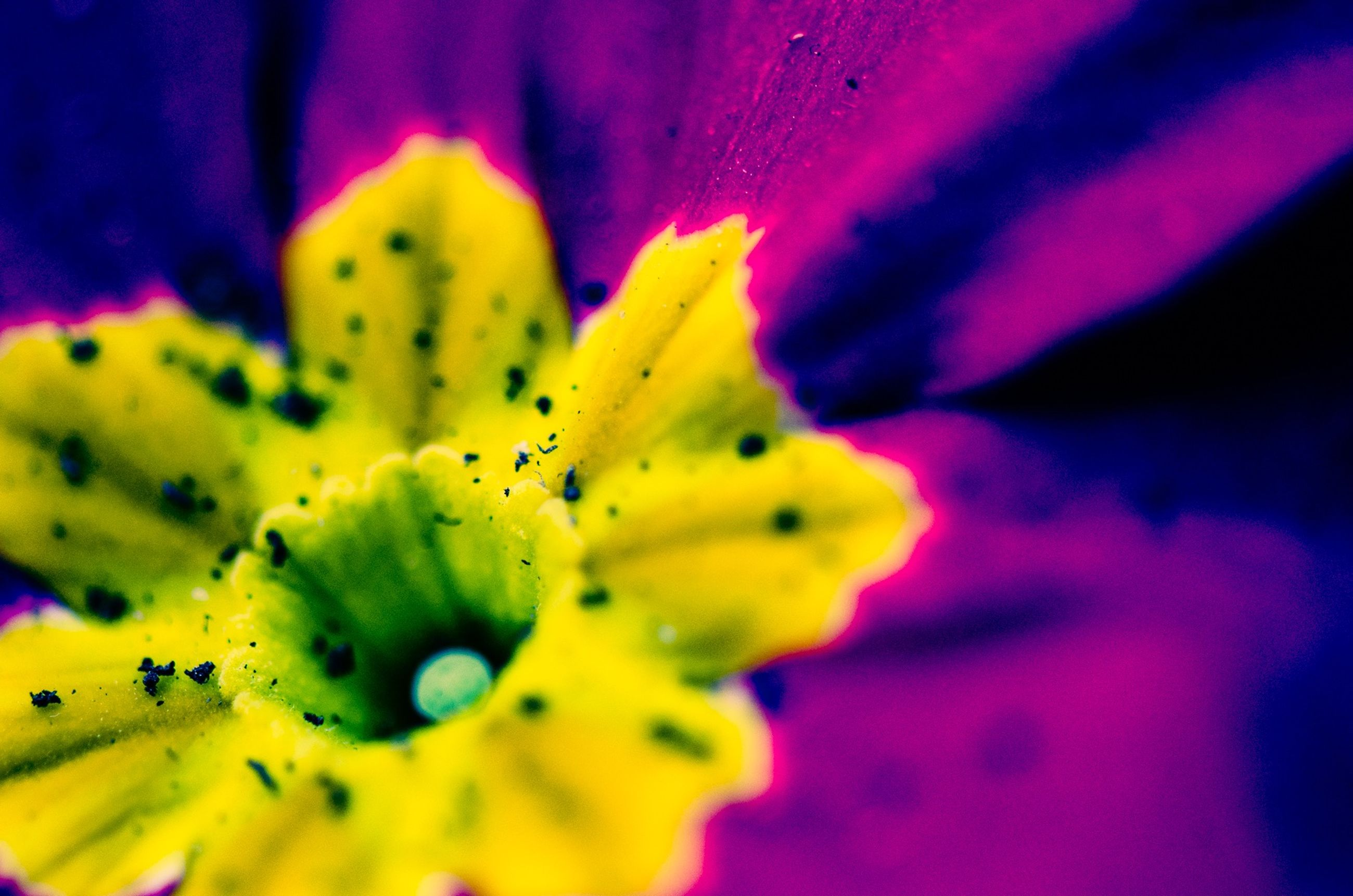 flower, petal, flower head, freshness, fragility, yellow, close-up, beauty in nature, single flower, growth, full frame, pollen, stamen, extreme close-up, nature, backgrounds, macro, selective focus, blooming, in bloom