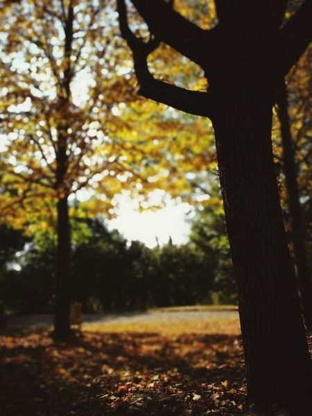 Tree Autumn Tree Trunk Forest Leaf Close-up Sky Growing Plant Life Branch Woods