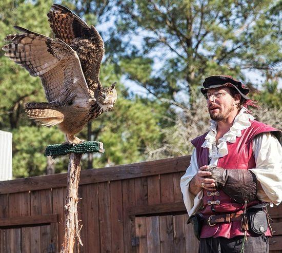 People Of EyeEm EyeEmTexas Sherwood Forest Faire Renaissance Festival Sherwood Forest Canon7dMK2 Animals Birds Owls