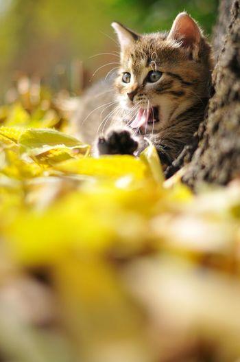 Leaves Auttumn