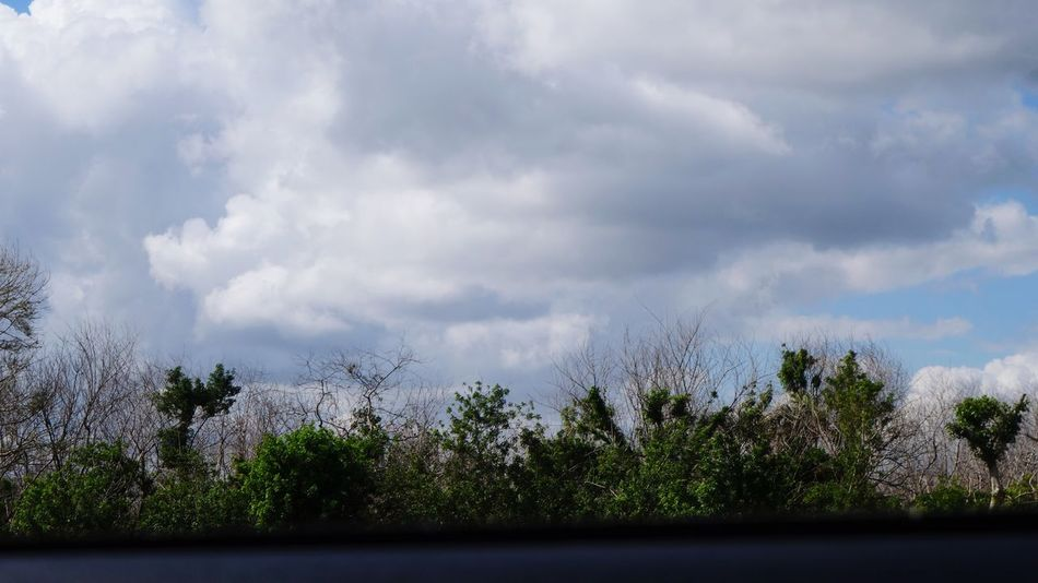 Nature Through The Passenger Side Window Passenger View Tree Sky Cloud - Sky Nature No People Day Tranquility Outdoors Beauty In Nature Tranquil Scene Scenics Landscape Growth