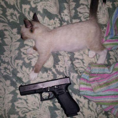 Snoozykitty Arya WhatDoWeSayToDeath ? NotToday ! GameOfThrones glock17gen4 molonlabe ! catsandguns kittyporn gunporn