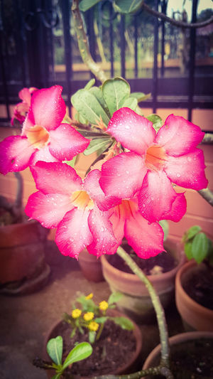 Pink Pink Flowers,Plants & Garden Nature Nature Photography Flower Growth Nature Pink Color Petal Beauty In Nature Plant