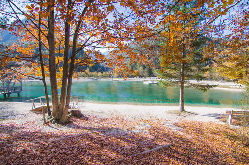 Tree Autumn Plant Water Nature Change Lake No People Tranquility Tranquil Scene Beauty In Nature Day Scenics - Nature Leaf Landscape Plant Part Outdoors Land Orange Color Slovenia Triglav National Park Tranquility Travel Destinations Lake Jasna EyeEm Nature Lover