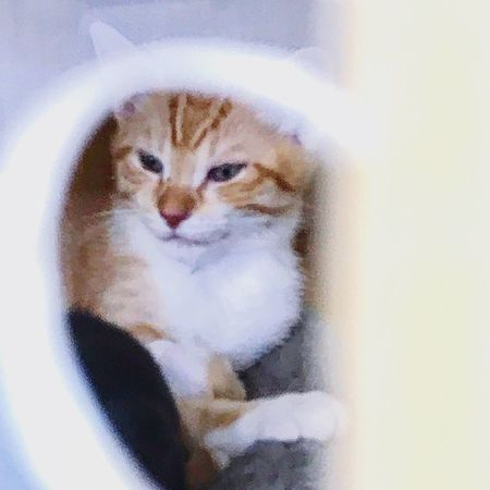 Cute Pets One Animal Kitten Animal Themes Domestic Cat Portrait Feline No People Indoors  Pets Close-up Throughthegap Enclosure Sitting Adopt A Shelter Pet Pet Portraits