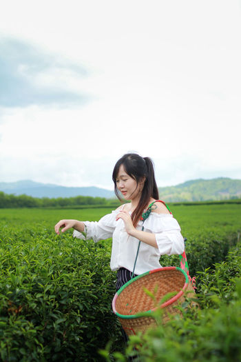 Smiling woman with basket picking leaves in tea plantation field