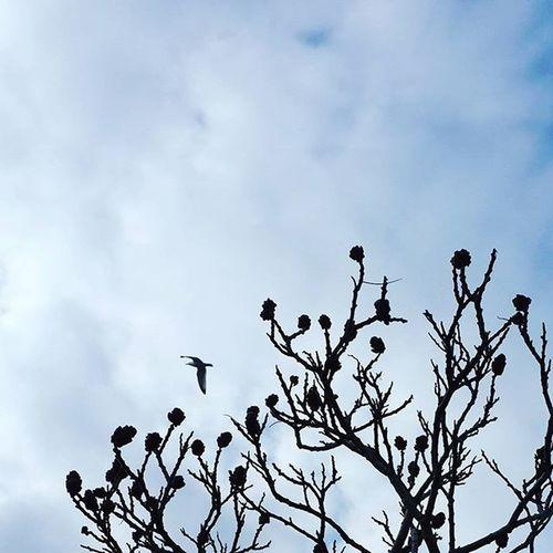 Еngland Tree