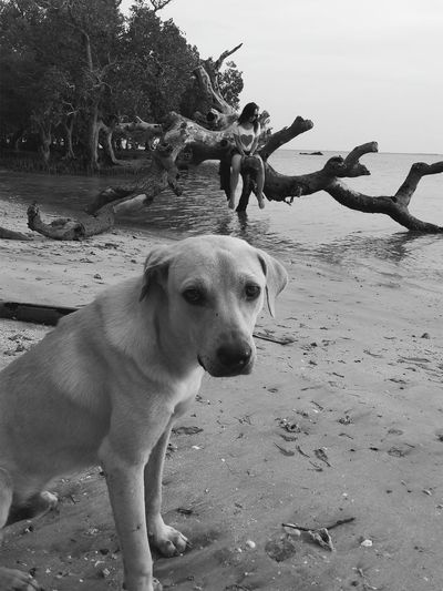 look into my eyes... Black And White Dogs Eyes EyeEmNewHere Seaside Dogmodel Dog Pets Mammal Sand Domestic Animals Animal Themes One Animal Nature Beach Outdoors Day Water Sky