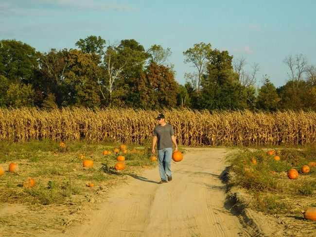 One Person Real People Full Length Field Nature Outdoors Photographybybrookechanelle Pumpkinpatch Pumpkins Pumpkin Man Man Walking