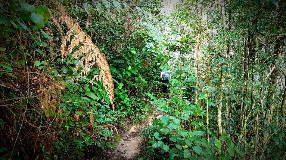 Hiking Jungle Trail Cameron Highlands Malaysia From Behind Walking Exploring Explore Leaves WoodLand Nature Nature Hike Hiking Trekking Trek Jungle Trees Green Greenery Colour Backgrounds Full Frame Low Section High Angle View Close-up Grass Green Color EyeEmNewHere A New Beginning
