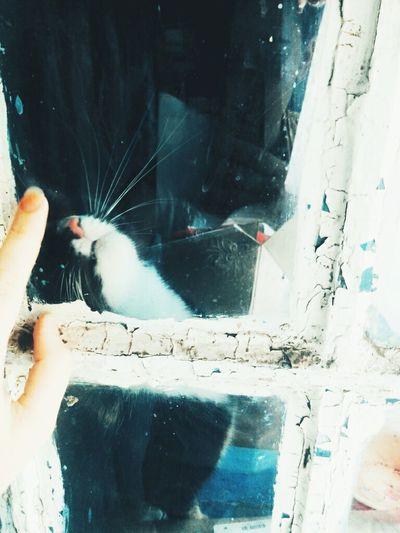 Cat♡ Hi! Cat Lovers
