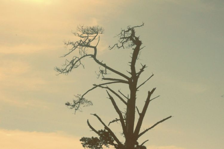 Tree Nature Environment Silhouette Sky Rural Scene No People Outdoors Sunset Branch Landscape Day Beauty In Nature Bird
