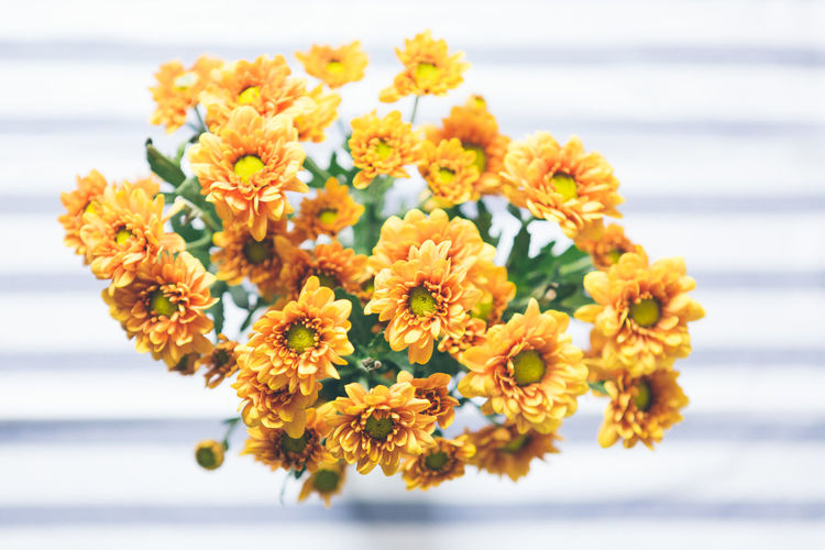 Beauty In Nature Blooming Close-up Day Flower Flower Head Focus On Foreground Fragility Freshness Marigold Nature No People Outdoors Petal Plant Yellow