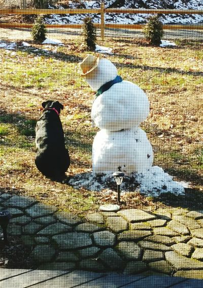 Snow, Snow, Snow. ⛄ Dog, Hanging Out, Enjoying Life Shadow Day Outdoors Sunlight Real People Nature Animal Themes Bird