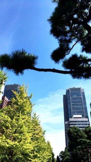 青空 Built Structure Architecture Building Exterior Tree Plant Sky Building Blue Office Building Exterior