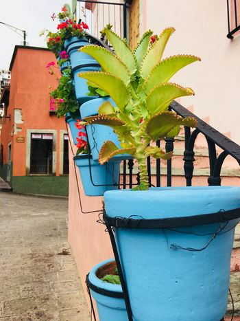 Blue pots Life Cheerful Inspire Colorful Guanajuato Plant Building Exterior Built Structure Potted Plant Architecture Nature Day No People Growth Decoration Flower Flowering Plant Creativity Outdoors