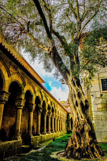 Olive tree in the cloister Architecture Church Claustro Guimarães Old Tree Old Tree🌳 Olive Tree Olivo Negro Tree Arcade Arch Architectural Column Architecture Cloister Cold Temperature Convent Convent Courtyard Garden Jardin Medieval Architecture Old Patio Del Convento Travel Destinations árbol