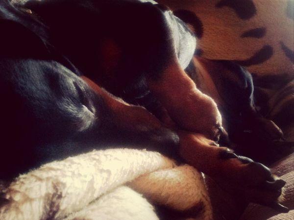 Dog Girl Polishgirl Likeback Vsco Love  Lov❤ My Love