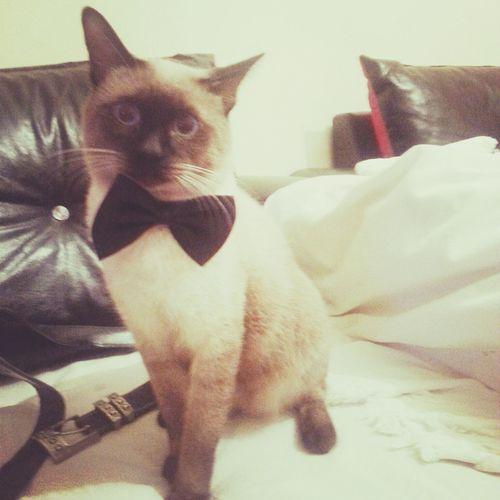 My Cat Lovely Love ♥ Duman ❤
