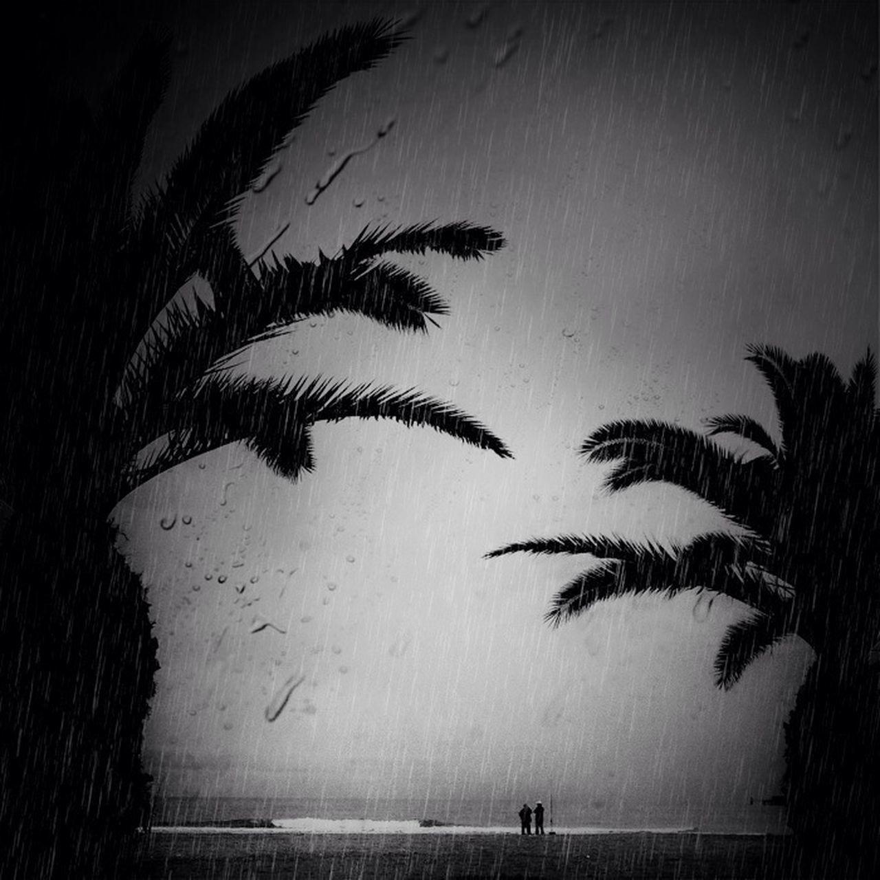 palm tree, large group of animals, tree, bird, outdoors, no people, animal themes, sky, day
