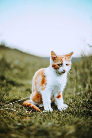 Pets Domestic Cat Animal One Animal Portrait Cute Looking At Camera Feline Domestic Animals Alertness Sitting No People Day Animal Themes Mammal Outdoors Full Length Grass Sky Nature Fresh On Market 2017