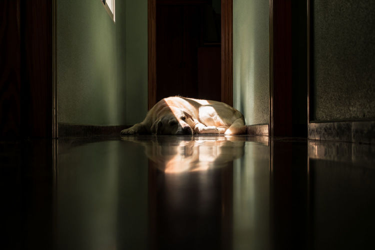 Reflection of person resting on floor