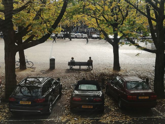 Tree Car Outdoors Room With A View Netherlands Autumn Day Amsterdam Tree Park Autumn Colors Autumn Leaves Bench Sitting On A Bench Day