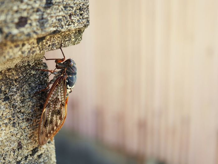 Close-up of bug on rock