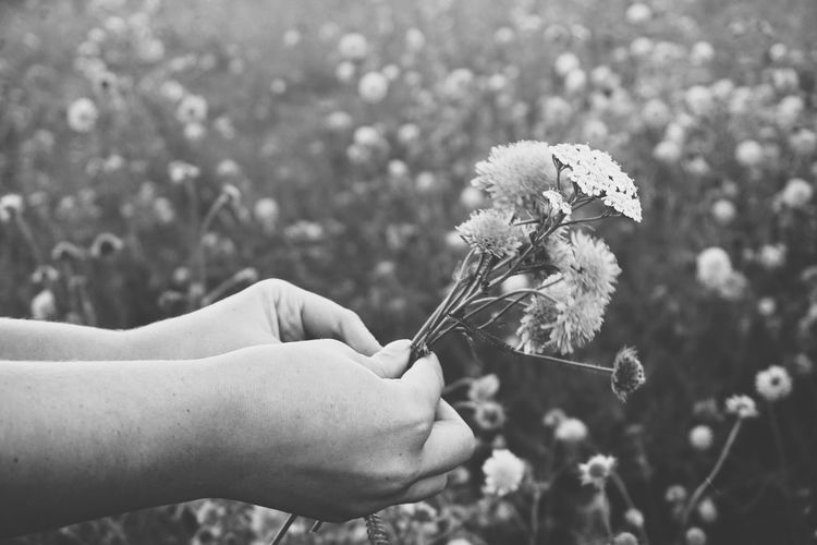 picking wild flowers Human Hand Human Body Part Flower Nature Outdoors Focus On Foreground Holding Adult Growth Plant People Summer Fragility One Person Springtime Day Beauty In Nature Close-up Lifestyles Wheat Monochrome Blackandwhite Black & White Black And White