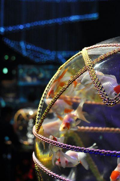 art aquariumもういっちょ Goldfish Aquarium Getting Inspired Relaxing Quality Time