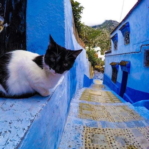 Things I Like Eye EyeEm Best Shots Eye4photography  Love Cat Cats Animals Blue Blackandwhite Majorelle Morocco Chefchaouen Nature