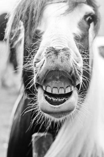 Animal Blackandwhite Close Up HORSE LIPS HORSE TEETH Horses Outdoors Smile :) Smile❤
