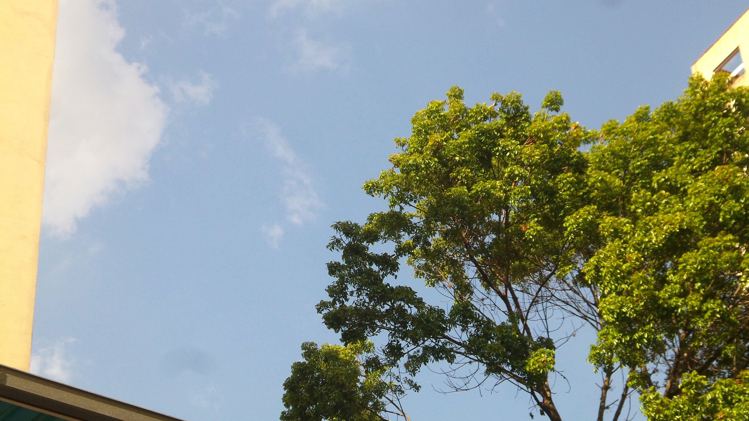 tree, low angle view, sky, growth, built structure, green color, blue, architecture, nature, day, branch, no people, outdoors, building exterior, high section, clear sky, beauty in nature, sunlight, tranquility, cloud