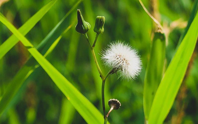 Leaves Flower