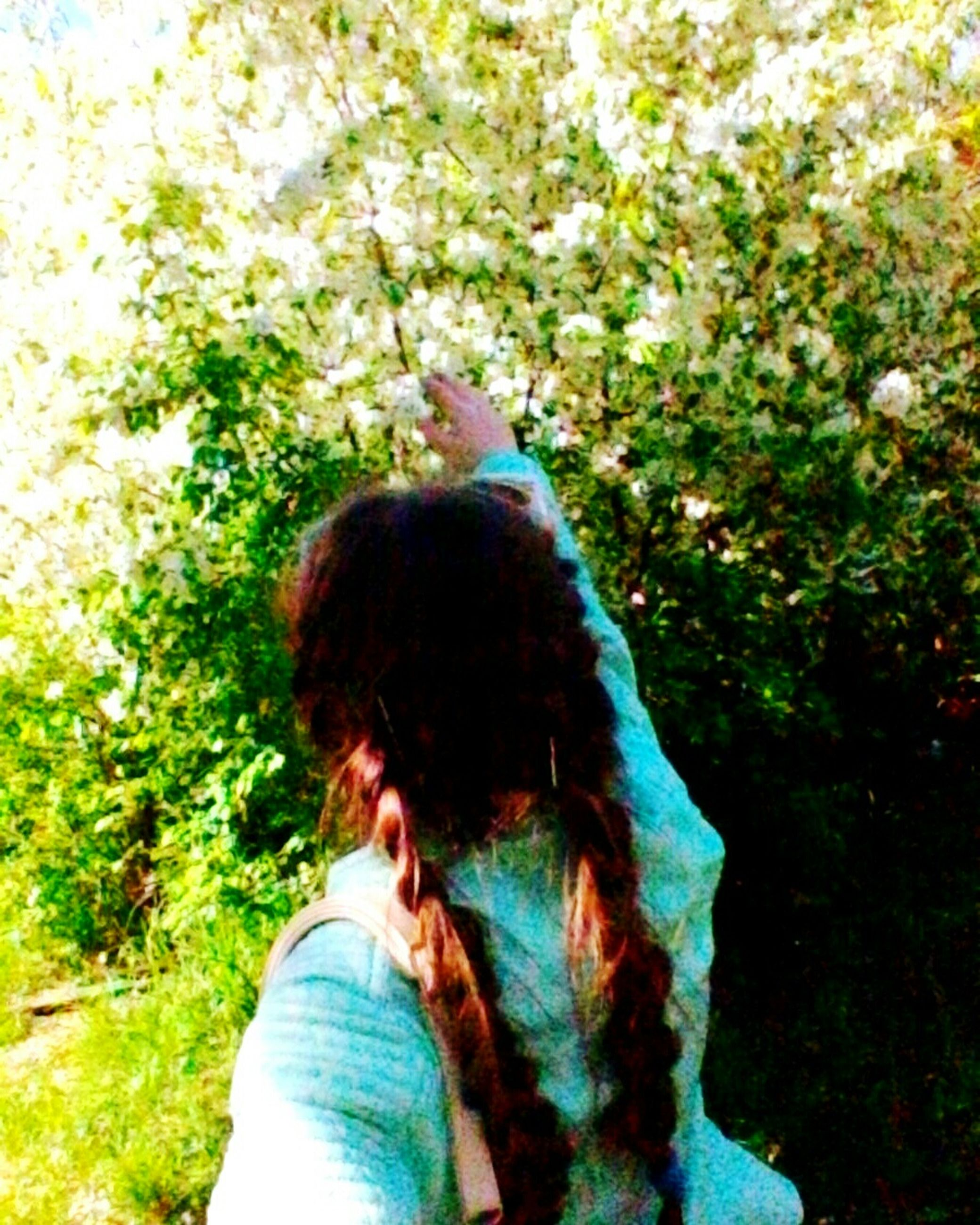 real people, tree, one person, leisure activity, day, lifestyles, rear view, outdoors, women, green color, nature, people