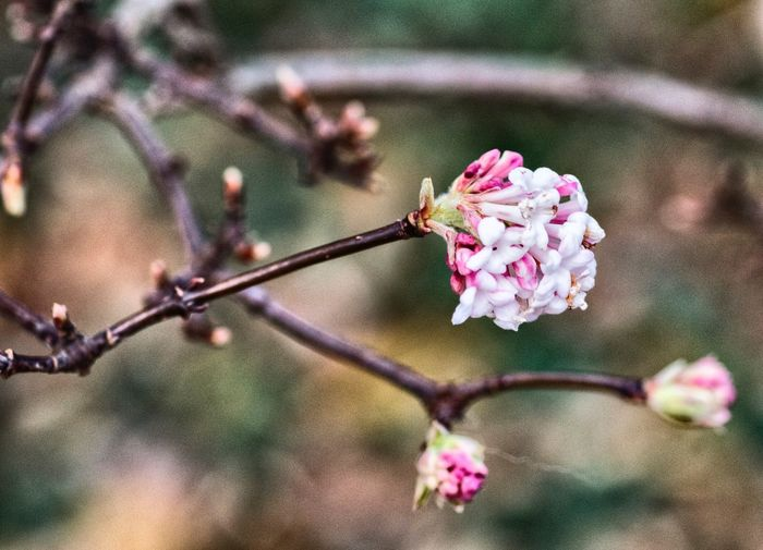 Flower Pink Color Beauty In Nature Nature Fragility Growth Petal Focus On Foreground Freshness Flower Head No People Blossom Close-up Outdoors Twig Branch Day Springtime Blooming Plant