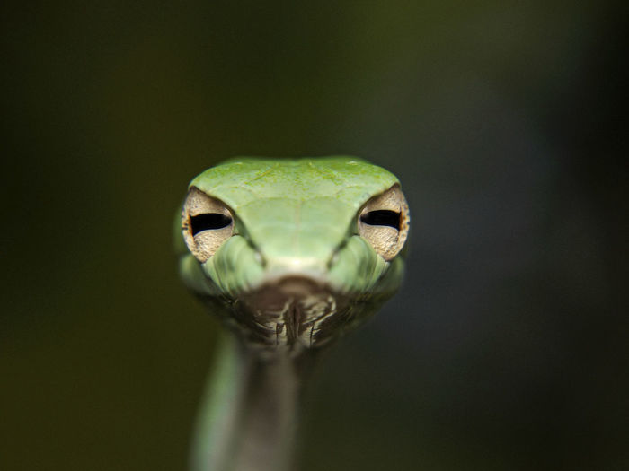 Cute Pets Snakes Green Eyes Reptile Outdoors Simple Adorable
