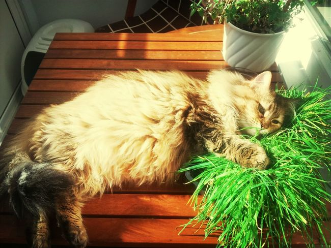 My Cat Is Chilllax